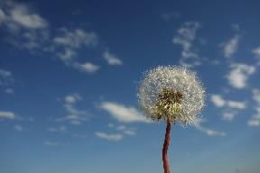 Fleur légère