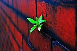 Plante ds mur